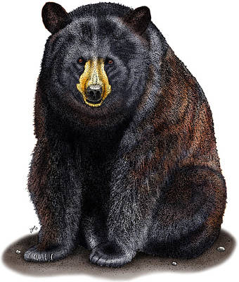 Photograph - American Black Bear by Roger Hall