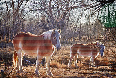 Colorado State Flag Photograph - American Breed by James BO  Insogna