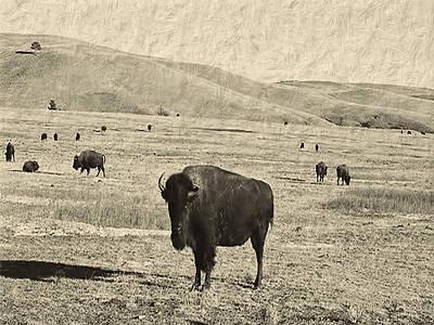 Bison Digital Art - American Buffalo by Cathy Anderson