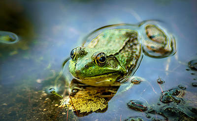 Fungi Heads Digital Art - American Bull Frog by Optical Playground By MP Ray