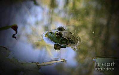 Photograph - American Bullfrog by E B Schmidt