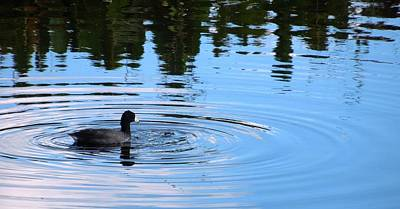 Pyrography - American Coot by Ron Davidson