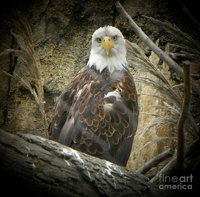 Photograph - American Eagle 2 by Shirley Moravec