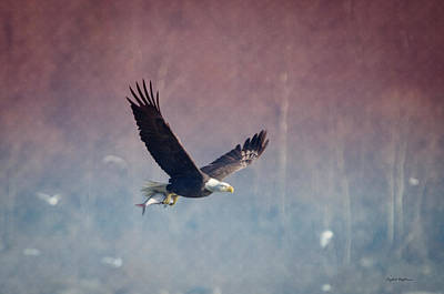 Photograph - American Eagle by Crystal Wightman