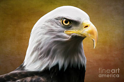 Photograph - American Eagle by Shannon Rogers