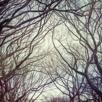 American Elm Trees Of Central Park In New York City In Winter Art Print by Lisa Russo