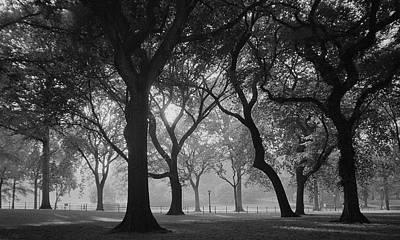 Photograph - American Elms by Cornelis Verwaal