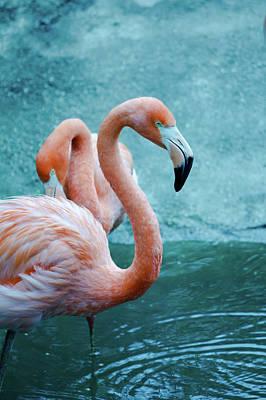 Trinidad And Tobago Wall Art - Photograph - American Flamingo by Bhwehlage