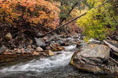 American Fork Canyon Creek In Autumn - Utah Art Print by Gary Whitton