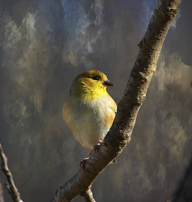Photograph - American Goldfinch 3 by Deena Stoddard