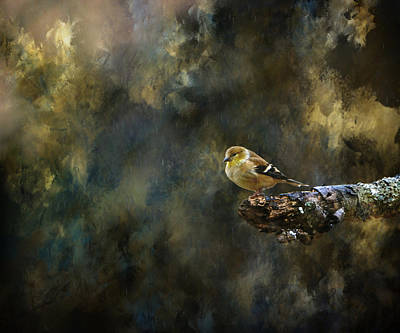 Photograph - American Goldfinch 4 by Deena Stoddard
