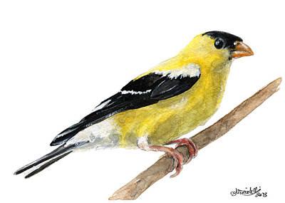 American Goldfinch Art Print by Carlo Ghirardelli