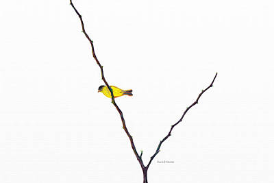 Landmarks Painting Royalty Free Images - American Goldfinch in the Tree Royalty-Free Image by Angela Stanton