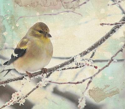 Photograph - American Goldfinch In Winter by Diane Alexander