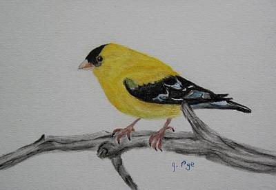 Pastel - American Goldfinch by Joan Pye