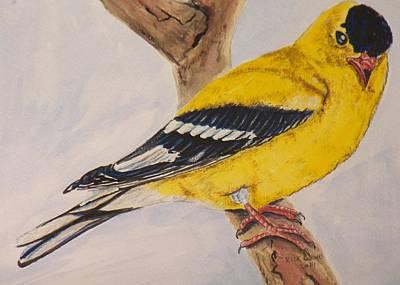 American Goldfinch Male Original by Richard Goohs