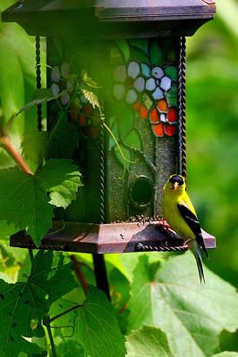Photograph - American Goldfinch by Paula Tohline Calhoun