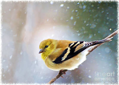 Photograph - American Goldfinch Snowy Day With Frame - Digital Paint 1 by Debbie Portwood