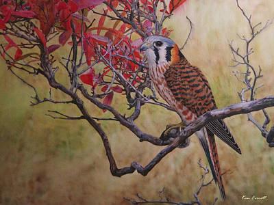American Kestrel Female Art Print by Ken Everett