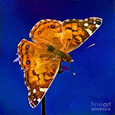 Photograph - American Lady Butterfly Blue Square by Karen Adams