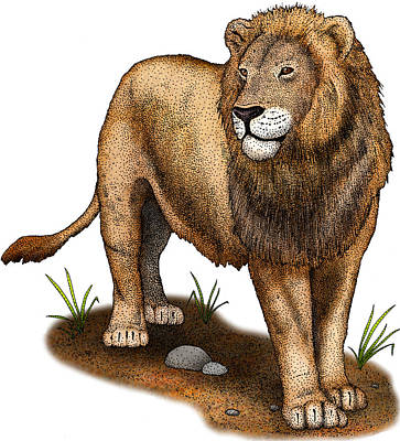 Photograph - American Lion Extinct, Illustration by Roger Hall