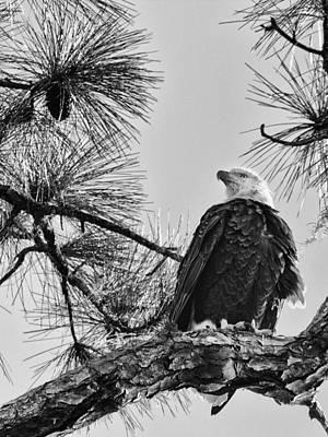 Photograph - American by Nicholas Evans