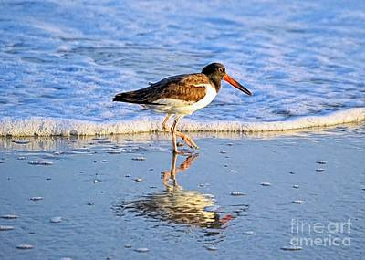 Photograph - American Oystercatcher by Sharon Woerner