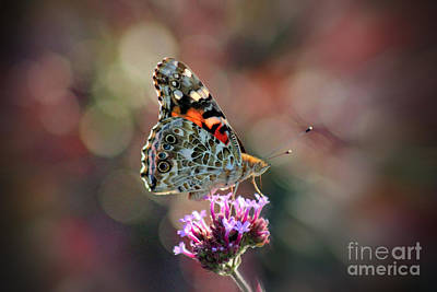 Photograph - American Painted Lady Butterfly 2014 by Karen Adams