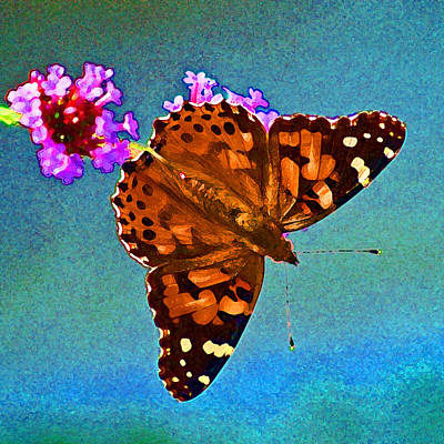 Photograph - American Painted Lady Butterfly Bright Blue by Karen Adams