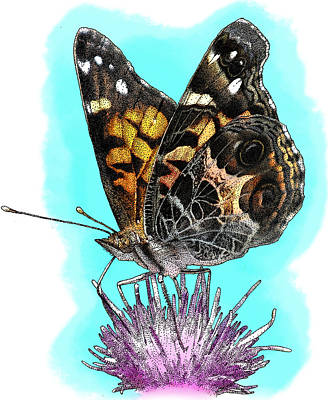 Photograph - American Painted Lady, Illustration by Roger Hall