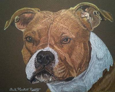 Drawing - American Pit Bull Terrier by Anita Putman