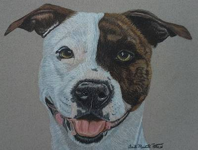 Drawing - American Pit Bull Terrier II by Anita Putman