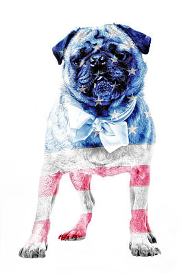 Fourth Of July Photograph - American Pug by Edward Fielding