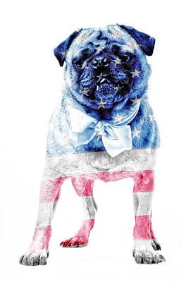 Animals Photos - American Pug by Edward Fielding