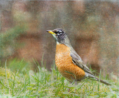 Photograph - American Robin by Angie Vogel