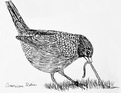 Early Spring Drawing - American Robin by Becky Mason