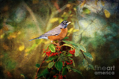 Perch Digital Art - American Robin - Harbinger Of Spring by Lianne Schneider