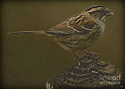 Photograph - American Sparrow by Sandra Clark