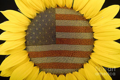 Patriotic Photograph - American Sunflower by James BO  Insogna