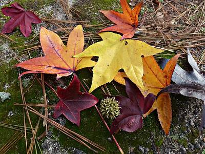 Art Print featuring the photograph American Sweetgum Autumn Display by William Tanneberger