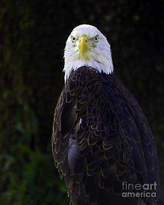 Photograph - American Symbol Three by Ken Frischkorn