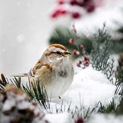 American Tree Sparrow In Snow Art Print by Christina Rollo