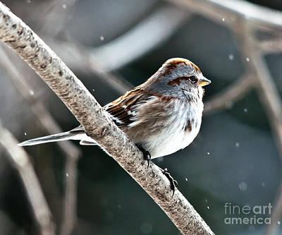 Winter Scene. Winter Landscape. Snow Landscape. Black And White. Birds Photograph - American Tree Sparrow Profile by Cheryl Baxter