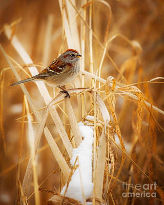 Metro Park Photograph - American Tree Sparrow by Todd Bielby
