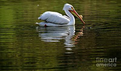 Photograph - American White Pelican by Elizabeth Winter