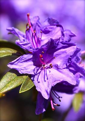 Photograph - Amethyst by Tracy Male