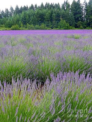 Photograph - Amidst Lavender   by Susan Garren