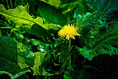 Arctium Lappa Photograph - Amidst The Weeds by Alexander Senin