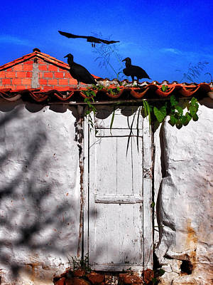 Photograph - Amigos Negros by Skip Hunt