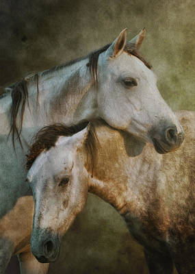 Gray Horses Photograph - Amigos by Ron  McGinnis